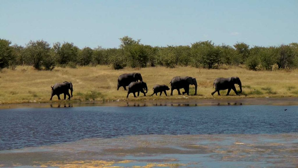 Logovid Fragen und Antworten – Die Elefanten gehen am Fluss entlang.